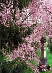 "Cincinnati - Spring Grove Cemetery & Arboretum ""Cherry Tree Corners Obelisk"""