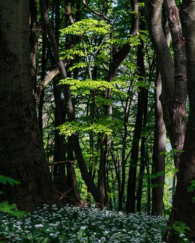 Junger Baum im Wald