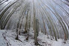 Sonnenstrahlen Frostwald