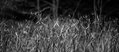 Lost in the Tall Grass