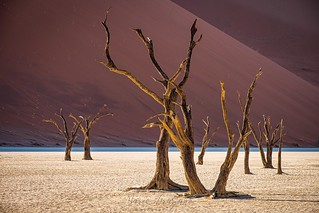 Deadvlei, Namib-Naukluft National Park