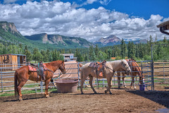 Horses ready for trail ride