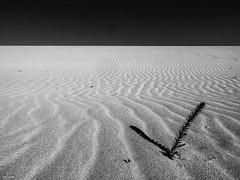 Dünen und Sand / dunes and sand