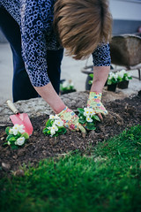 Gardener hands with gloves planting a flower.