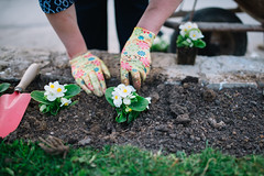 Gardener woman digging in the ground to plant a beautiful flower
