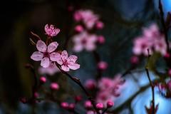 Spring Intensity