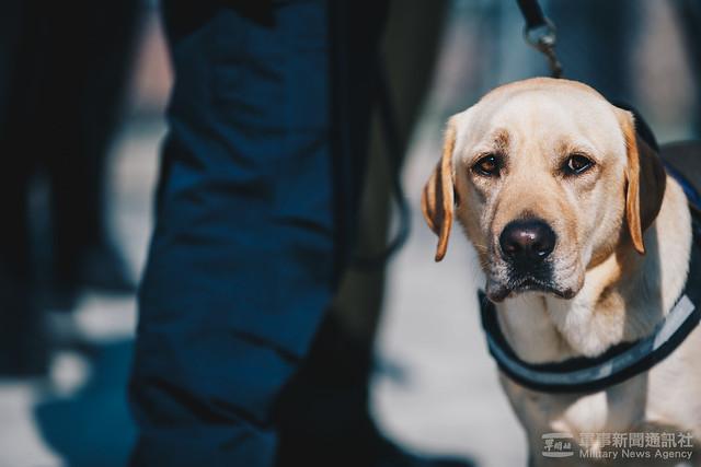 軍犬出任務20200207