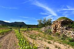 Barraca vinya i Foix 007