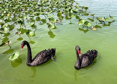 Lake Morton_2020