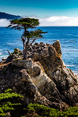 The Lone Cypress  of Pebble Beach #4