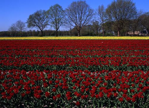 Tulpenroute Drenthe | explored