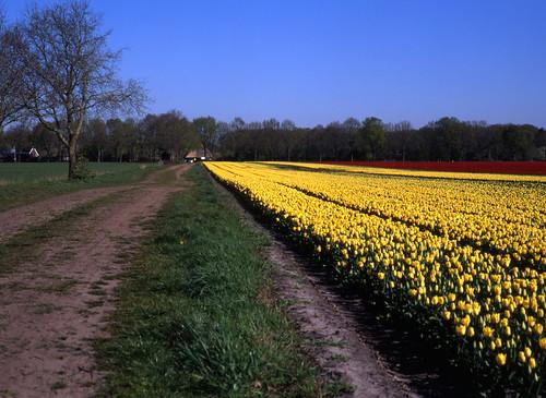 Tulpenroute Drenthe