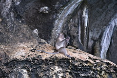 Loved this fellow examining his foot on Monkey Beach