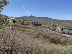Spring Photo #1