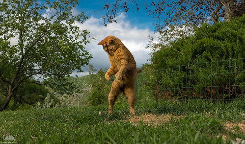 Feline Street Dance :-))