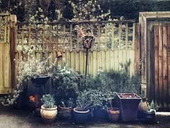 A Garden Collection