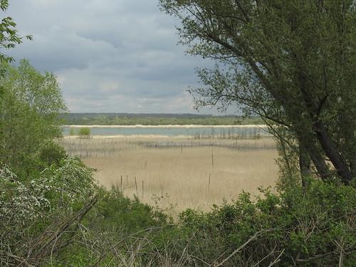 Goitzsche-Wildnis