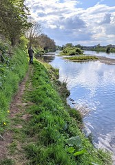 Down by the River Tweed, Wark, May 2020