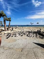 Birds in Limassol