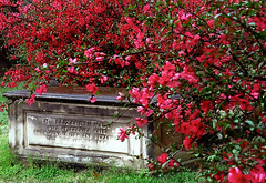 "Cincinnati - Spring Grove Cemetery & Arboretum ""Springtime Envelopes Elizabeth Hall"""