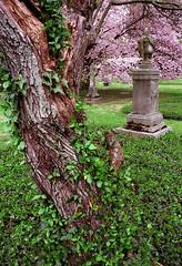 "Cincinnati - Spring Grove Cemetery & Arboretum ""Springtime Vase In The Grove"""