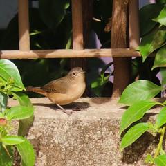 Pássaros/Birds