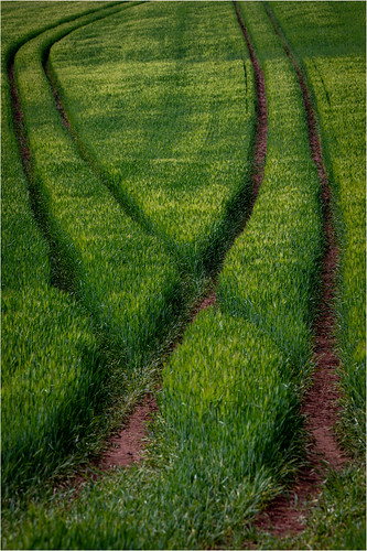 Lines . Green.