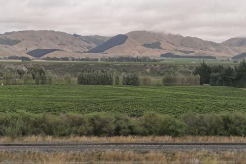 Picton - Kaikoura_1850894_dxo