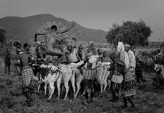 Bull Jumper, Sth Ethiopia