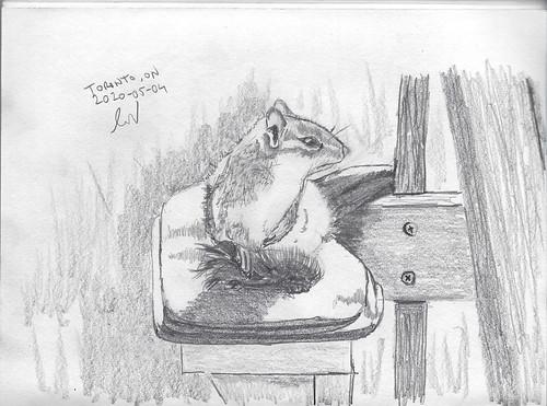 Chipmunk on a Muskoka Chair