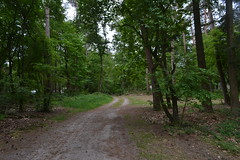 Bosweg in Besthmenerberg, Ommen (136FJAKA_3680)