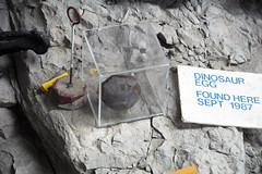 Dinosaur egg (Morrison Formation, Upper Jurassic; Cleveland-Lloyd Dinosaur Quarry, Emery County, Utah, USA) 1