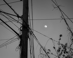 Tellypole Moon