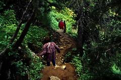 Norwegen 1998 (573) Røvassdalen