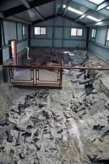 Dinosaur bones (Morrison Formation, Upper Jurassic; Cleveland-Lloyd Dinosaur Quarry, Emery County, Utah, USA) 7