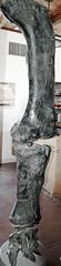 Camarasaurus sp. (sauropod dinosaur leg bones) (Morrison Formation, Upper Jurassic; Cleveland-Lloyd Dinosaur Quarry, Emery County, Utah, USA) 1