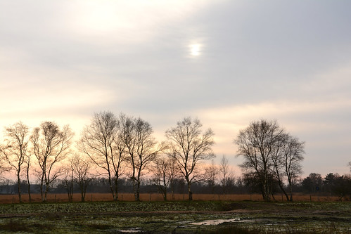 Westerveld  Dijkjesveen