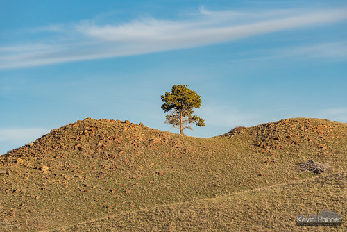 Tree On a Hilltop