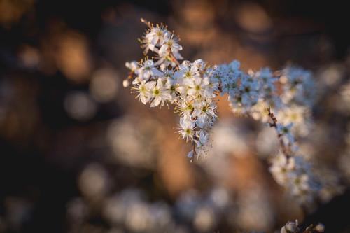 Springtime in Thuringia