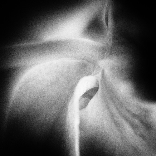 side view - orchid flower
