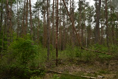 Bos in Besthmenerberg, Ommen (136FJAKA_3685)