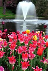 """Cincinnati - Spring Grove Cemetery & Arboretum """"Tulips At Willow Fountain"""""""