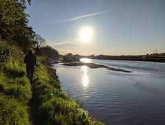 River Tweed at Wark, May 2020