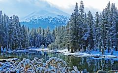 Mother Nature's Flocking, Tioga Lake, Yosemite 5-15