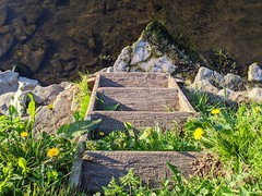 Steps on the River Tweed, Wark, May 2020