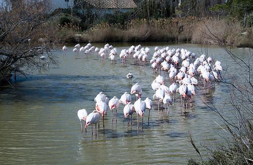 Parc Naturel de Camargue (III)