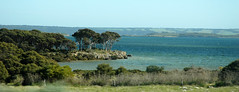 Eastern Cove (Kangaroo Island, South Australia) 1