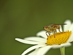 Insecte sur une fleur.