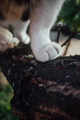 Close-up of cat paws on a tree branch
