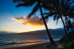 Palms by sunset